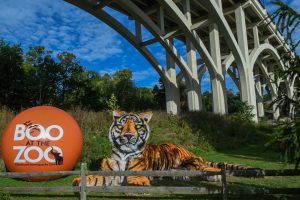 Boo at the Zoo Presented by Citizens Bank @ Cleveland Metroparks Zoo | Cleveland | Ohio | United States